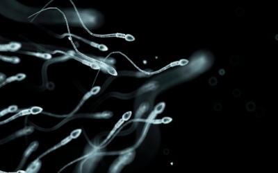 mandlig infertilitet – årsager og behandling